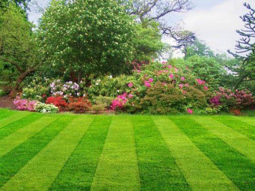 Garden & Allotment